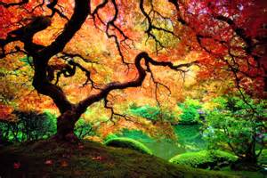 colourfull tree psychedelic art elevated hustle 8