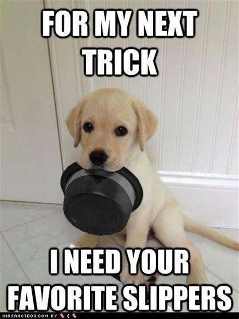 Cute Puppy Memes - puppy meme dog lover pinterest