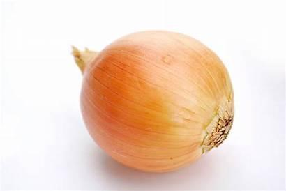 Onion Wikipedia Lauk Wiki