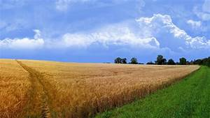 Wheat field wallpaper - 83965