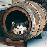 Actual Beds For Dogs Images