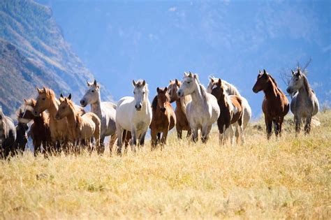 herd horses horse dynamics understanding together telling behaviors pasture harmoniously groups help