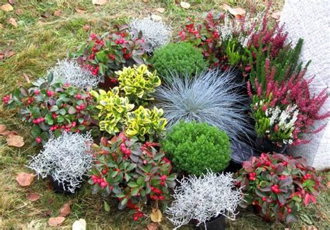 bildergebnis fuer grabbepflanzung winter zahradni napady