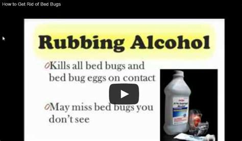 64 Best Ideas About Bed Bugs! On Pinterest