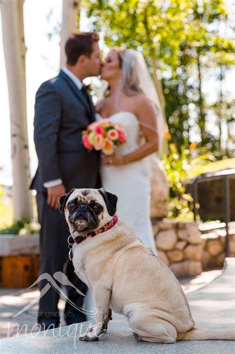 Lake Tahoe Wedding Photography Couple With Pet Pug Dog