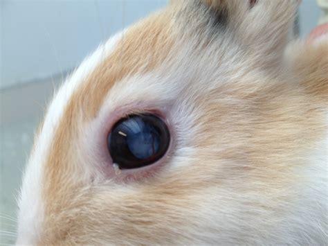 oogleden rood