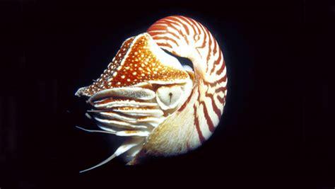 waikiki aquarium nautilus