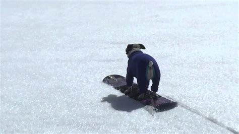 jack russell terrier snowboard   champ