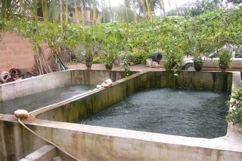 Backyard Tilapia Farming Photos