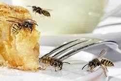 Was Essen Wespen : wespen vertreiben und bek mpfen tipps zur wespenbek mpfung ~ Frokenaadalensverden.com Haus und Dekorationen