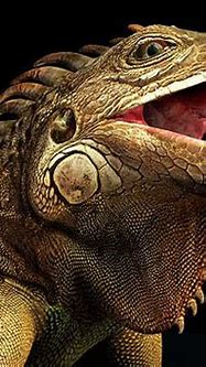 25 Best 3D Animals and Character design examples for your ...