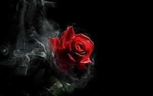 Smoky Red Rose