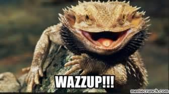 Lizard Meme - wazzup lizard