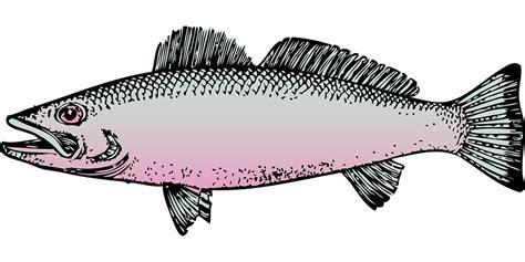 Gambar Ikan Bandeng Vector