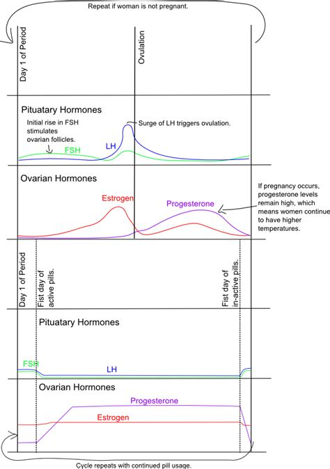 ready set chart hormone confusion the biology