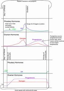 Ready, Set, Chart!: Hormone confusion: the biology behind ...