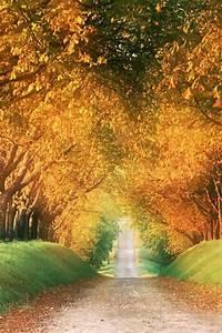 Paesaggio Strada Alberi Autunno - Natura