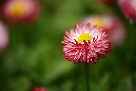 Shallow Focus Photography Of Pink Flowers · Free Stock Photo
