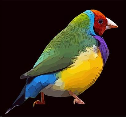 Warna Burung Warni Gambar Paling Baru Vektor
