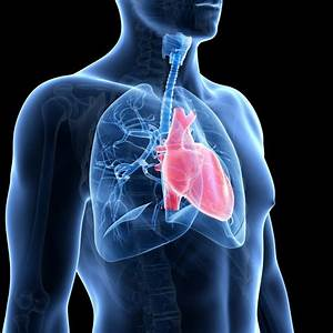 People With Lung Cancer  U0026 39 Deserve Better Treatment U0026 39  Says
