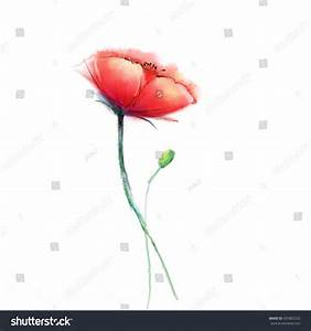 Watercolor Painting Poppy Flower Isolated Flowers Stock ...