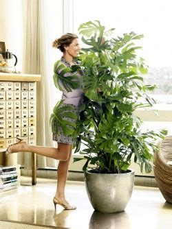 17 Best images about Plants in the living room on