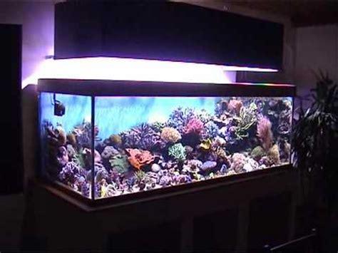 kit aquarium eau de mer complet aquarium eau de mer 1000 litres wmv