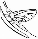 Mayfly Coloring Pages Tattoos Silverfish Insect Animals Colorful Template Sketch sketch template