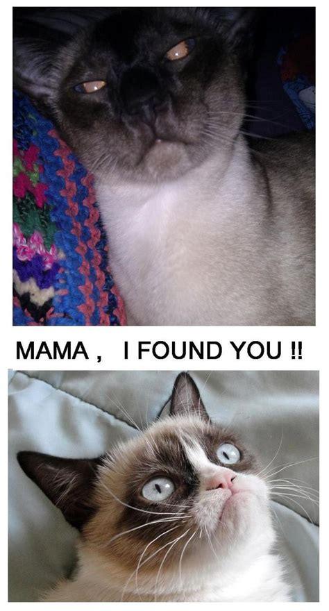 #grumpycat #meme For More Grumpy Cat Quote, Humor And Meme