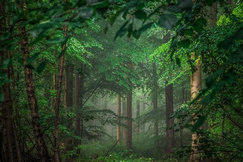 landscape, landscape, Trees, Forest Wallpapers HD ...