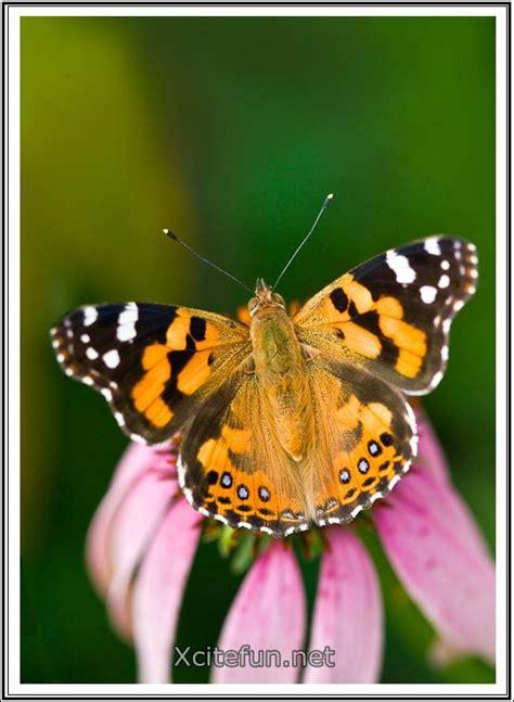 Beautiful Small Nature World  Xcitefunnet