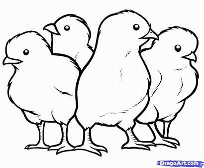 Coloring Ayam Gambar Mewarnai Anak Printable Chicken