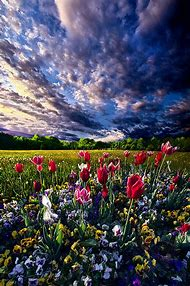 Beautiful Spring Flower Photography