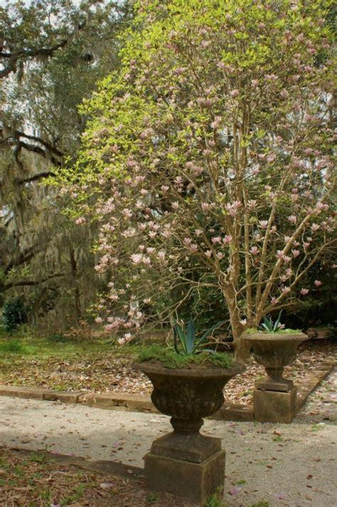 goodwood museum gardens