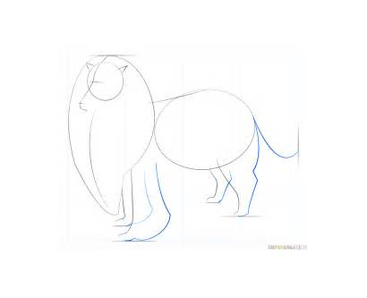 Collie Draw Rough Step Drawing Line Tail