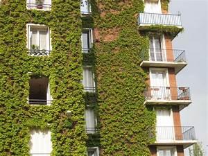 Mairie De Paris Formation : les citoyens pl biscitent les murs v g talis s et le jardinage l 39 cole biodiv 39 ille ~ Maxctalentgroup.com Avis de Voitures