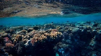 Underwater Ocean 4k Corals Algae Uhd Hdv