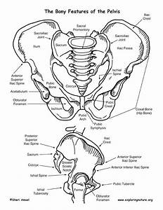 Pin By Exploring Nature  Life Science On Human Body