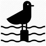 Seagull Icon Bird Water Sea Ocean Holiday