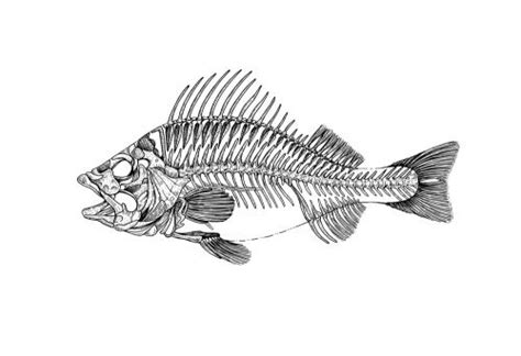 Stylized Fish Skeleton Black White Ink Drawing