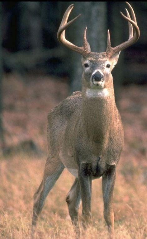 deer hunting season silent opener saturday sports