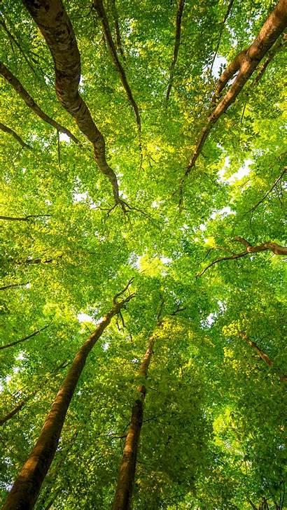 4k Trees Forest 8k Leaves Sunlight 5k