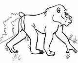Coloring Baboon sketch template