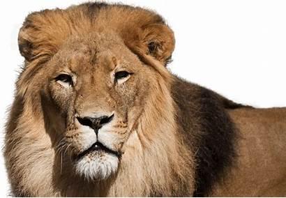 Lion African Zoo National Blonde Aquarium Lions