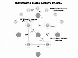 Grow Your Own Wampanoag  U0026 39 Three Sisters U0026 39  Garden