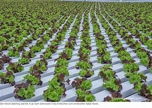 Gewächshaus Erde Wechseln : futuristische salate wachsen in rinnen eppenberger media gmbh ~ Whattoseeinmadrid.com Haus und Dekorationen