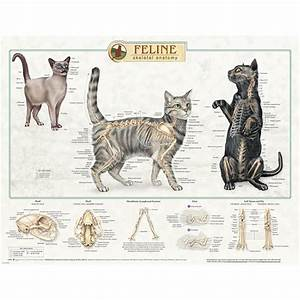 Feline Skeletal Anatomy Laminated Chart 92530