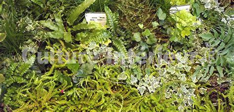 lot de 25 plantes pour mur v 233 g 233 tal ext 233 rieur monjardinvertical fr