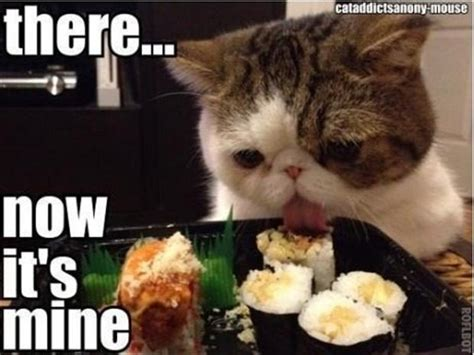 Food Cat Meme - funny pictures cat eating food dump a day