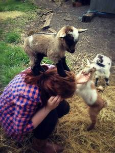 Baby goat conquers human   Cute Animals   Pinterest